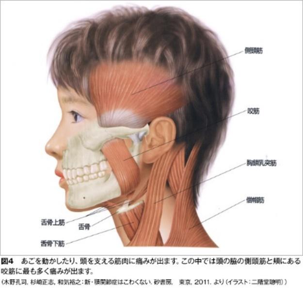 顎関節周囲の筋肉